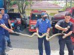 petugas-damkar-kota-parepare-evakuasi-ular-sanca-yang-berkeliaran-di-jl-andi-makkasau.jpg
