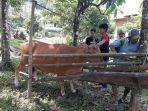 petugas-ternak-sapi-sedang-memberi-tanda-kepada-ternak-masyarakat-di-sinjai-timur.jpg