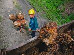 pks-luwu-ptpn-xiv-mengajukan-sertifikasi-ispo-indonesia-suistanable-palm-oil.jpg