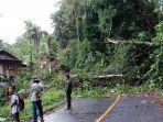 pohon-besar-tumbang-di-jalan-poros-palopo-toraja-1.jpg
