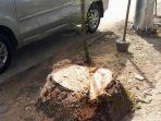 pohon-di-jl-boulevard-sudah-terpotong_20170524_122313.jpg