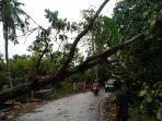 pohon-tumbang-di-desa-kaloling-kecamatan-gantarangkeke-bantaeng-selasa-792021.jpg