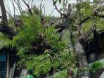 pohon-tumbang-di-wilayah-antang-raya-kecamatan-manggala.jpg