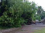 pohon-tumbang-nyaris-menimpa-kantor-pdam-kabupaten-majene1.jpg