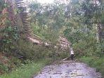 pohon-tumbang-terjadi-di-jalan-poros-borong-rappoa.jpg