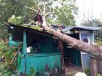 pohon-tumbang-yang-menimpa-rumah-warga-di-soddange-kelurahan-biru.jpg