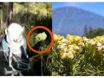 potongan-video-wanita-petik-bunga-edelweis-di-gunung.jpg