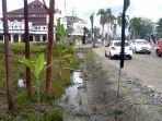 puluhan-batang-pisang-ditanam-oleh-warga-korban-banjir-bandang-di-pinggir-jalan-trans-sulawesi.jpg