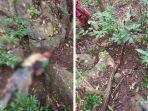 suardi-seorang-warga-di-kabupaten-bone-sulawesi-selatan-ditemukan-tak-bernyawa-digigit-ular-piton.jpg