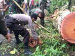 suasana-evakuasi-puluhan-pohon-tumbang-di-borong-rappoa-bulukumba.jpg