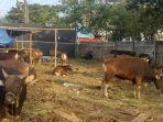 suasana-pedagang-sapi-di-jl-tun-abdul-razak-kabupaten-gowa-rabu-1472021-siang.jpg
