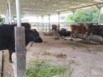 tempat-penyimpanan-hewan-ternak-di-rph-manggala-kecamatan-manggala-2372021.jpg