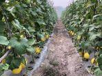terkait-impor-hortikultura-3.jpg