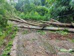 tiang-listrik-patah-setelah-pohon-tumbang-di-desa-polewali-kecamatan-sinjai-selatan.jpg