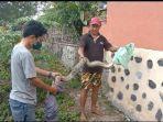 warga-kassi-kassi-kecamatan-tarowang-jeneponto-tangkap-ular-sanca.jpg