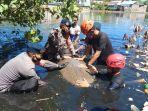 warga-parepare-evakuasi-seekor-ikan-duyung-jenis-dugong-yang-terdampar-di-perairan-tonrangeng.jpg