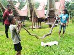 warga-tandung-labo-toraja-utara-temukan-ular-piton-sepanjang-empat-meter.jpg