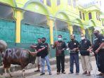 yosia-rinto-kadang-menyerahkan-satu-ekor-sapi-kurban-di-masjid-besar-rantepao.jpg
