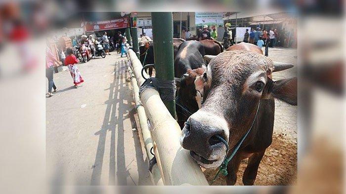 Larangan Pada Hari Setelah Idul Adha, Saat Itu Penyembelihan Hewan Kurban Masih Dilakukan