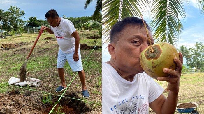 Gubernur Olly Dondokambey Berkebun Tanam Jeruk Bali, Lepas Dahaga Teguk Kelapa Muda