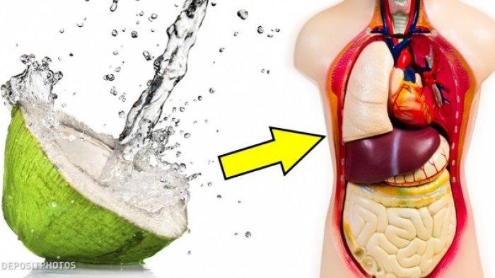 5 Manfaat Air Kelapa Untuk Tubuh, Cek Faktanya Disini, Salah Satunya Berperan Sebagai Antivirus