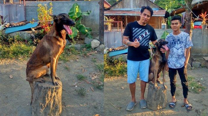 Tag Anjing Ras Aldi Pernah Digigit Anjing Malinois Belgian Peliharaannya Tribun Manado