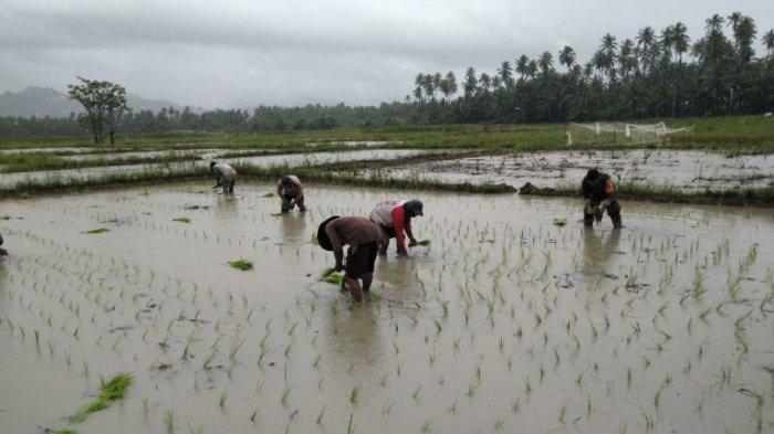Pemkab Bolmong Siapkan Bibit Unggulan Sulutan untuk Petani