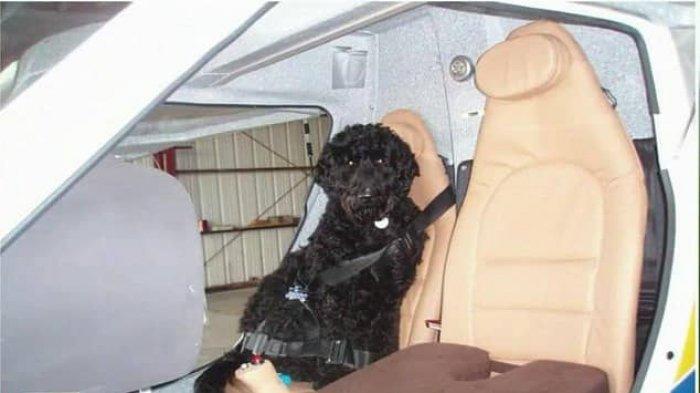 Seekor Anjing Diduga Jadi Penyebab Kecelakaan Pesawat
