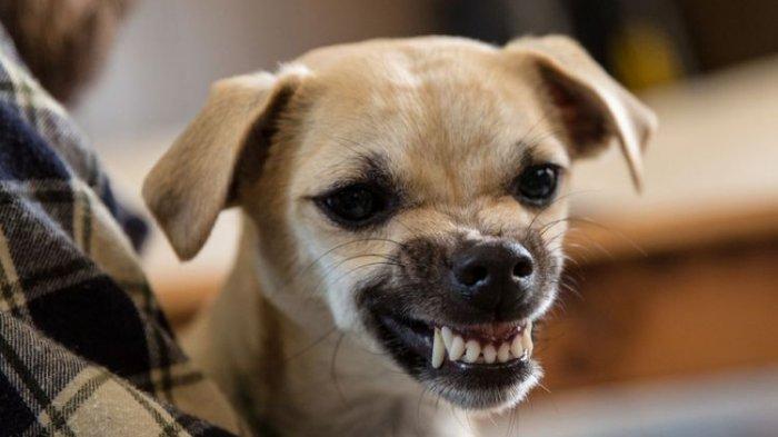 Ilustrasi anjing.