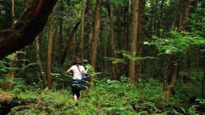 Inilah Hutan Aokigahara di Jepang, Tempat Ribuan Orang Bunuh Diri