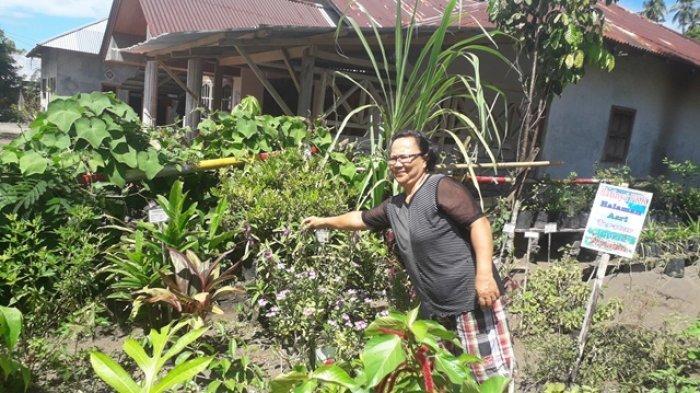 Mengintip Tradisi Tanaman Obat Desa Pinilih Minut, Sakit Parah? Tinggal Petik di Pekarangan