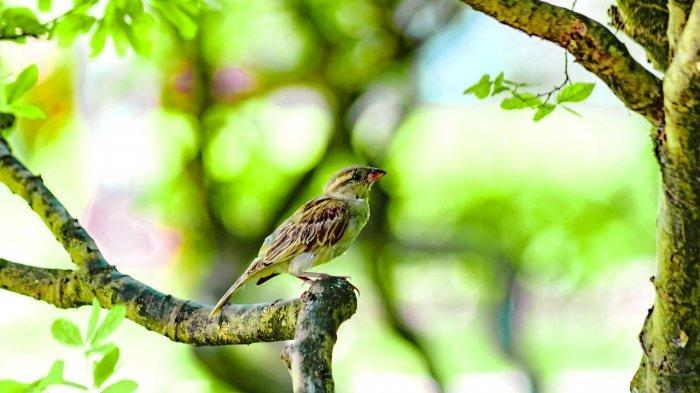 Arti Mimpi Menembak Burung, Pertanda Akan Mengalami Masalah hingga Mendapatkan Rezeki, Ini Tafsirnya