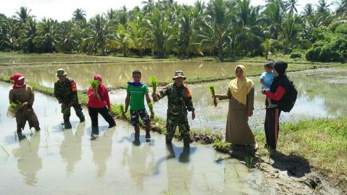 Babinsa Desa Bintauna Dorong Petani Segera Mengolah Lahan