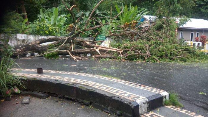 Badai Surigae Terjang Sangihe, Pohon Tumbang di Mana-mana, BPBD Imbau Warga Waspada