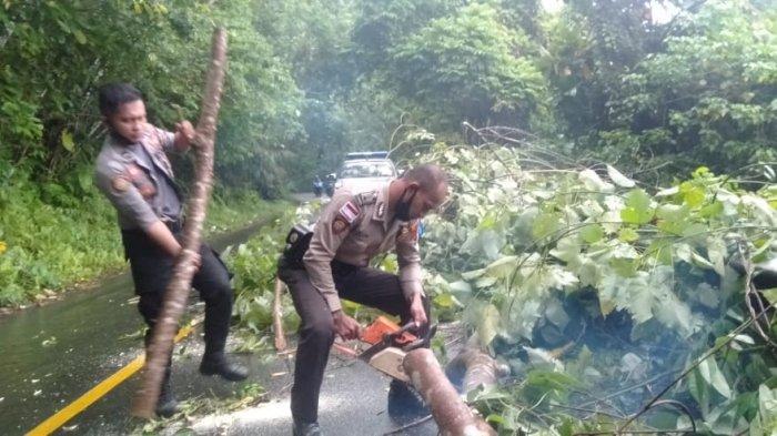 Badai Surigae menerjang Sangihe, Senin (19/04/2021) mengakibatkan pohon tumbang, menara telekomunikasi roboh dan rumah warga rusak.