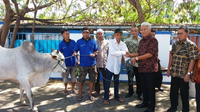 Bank SulutGo Bagikan16 Ekor Sapi  Kepada Kaum Duafa di Sulut dan Gorontalo