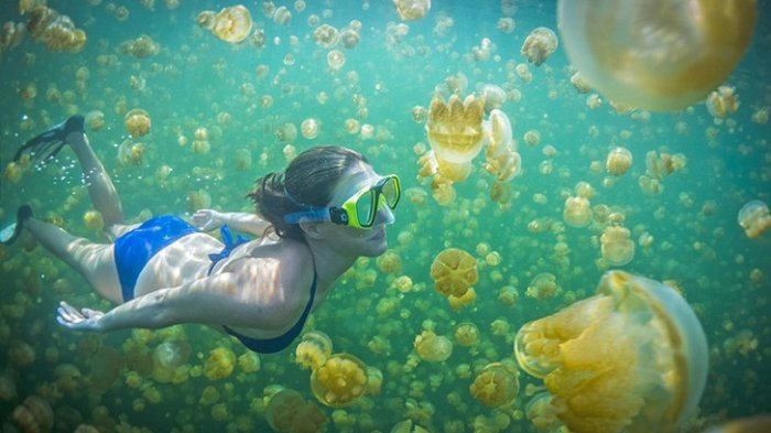 Berenang Bersama Ubur-ubur Jinak, Yuk Cuuz ke Desa Lembanato