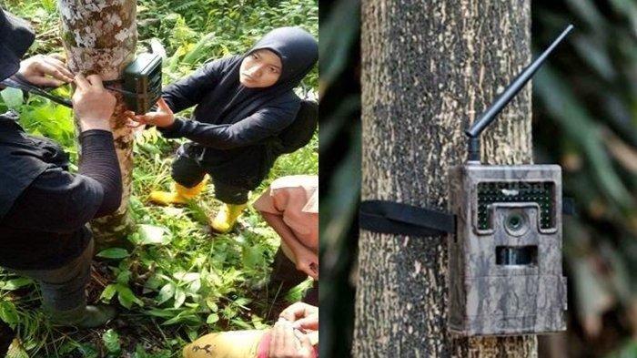 Warga Heboh Lihat Makhluk Aneh Mengerikan Berkeliaran Bebas, BKSDA Pasang Kamera Pengintai