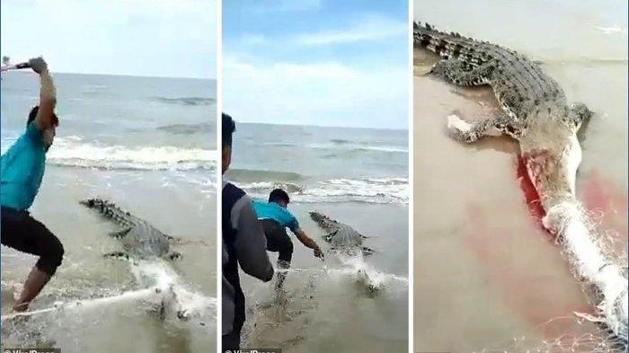 Viral Video Buaya Dipukul Kayu dan Palu Berkali-kali oleh Nelayan, Moncong Berdarah, Kepala Hancur