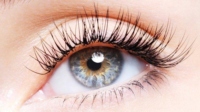 5 Bahan Alami BikinBulu Mata Panjang dan Tebal, Lupakan Bulu Mata Palsu!