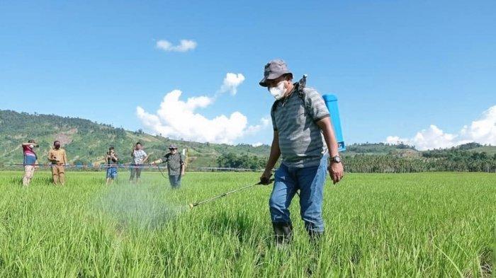 Tinjau Area Persawahan Sangkub, Depri Ajak Petani Lakukan Inovasi Pertanian