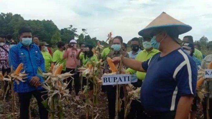 Bupati Talaud Apresiasi Poktan El-Shadai Desa Rainis Batupenga untuk Hasil Panen Perdana