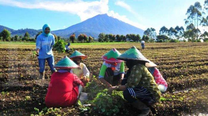 Suarakan Aspirasi Petani, DPRD Sulut: Dari 6 Presiden, Nanti di Era Jokowi Hasil Pertanian Kena PPn