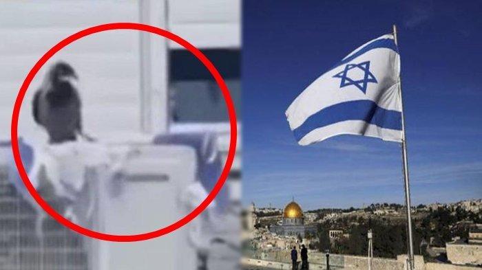 Seekor Burung Gagak Terekam Merobek-robek Bendera Israel, Husein: Itu Adalah Tanda Kebesaran Allah