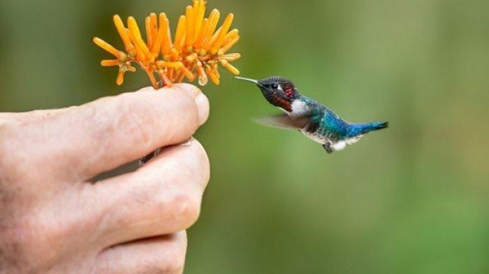 10 Arti Mimpi Tentang Burung Kolibri, Bisa Jadi Anda Tidak dapat Penuhi Impian, Cek Tafsirannya