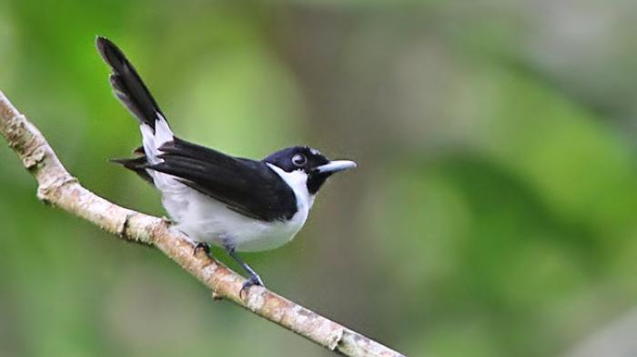Arti Mimpi Melihat Burung Berkicau, Bisa Jadi Pertanda Segera Terbebas dari Permasalahan