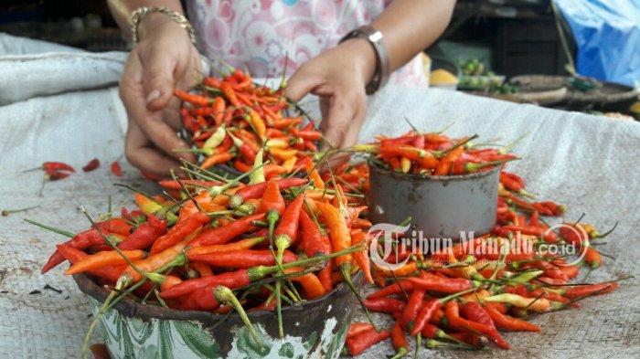 Harga Cabai Rawit Merah Di Manado Turun Rp 34 000 Kg Tribun Manado