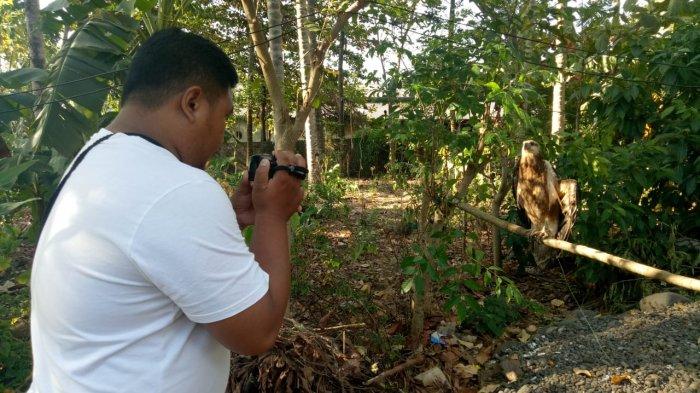 Penggiat Konservasi Bersama Warga Selamatkan Burung Elang Sulawesi