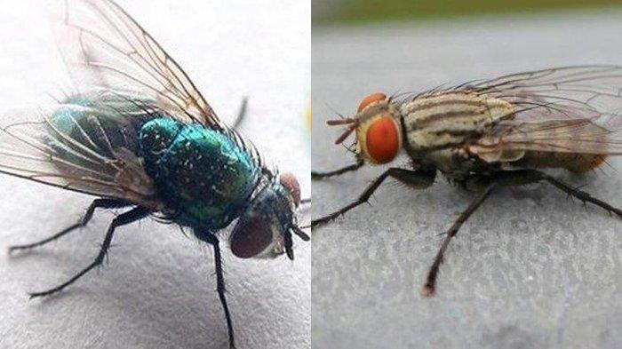 Tak Banyak yang Tahu, Cara Ampuh Mengusir Lalat di Rumah, Cukup Pakai Bumbu Dapur