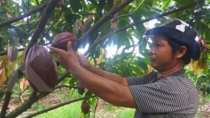 Cargill dan Nestle Kolaborasi, Dorong Perbaikan Hidup Ribuan Petani Kakao di Sulawesi